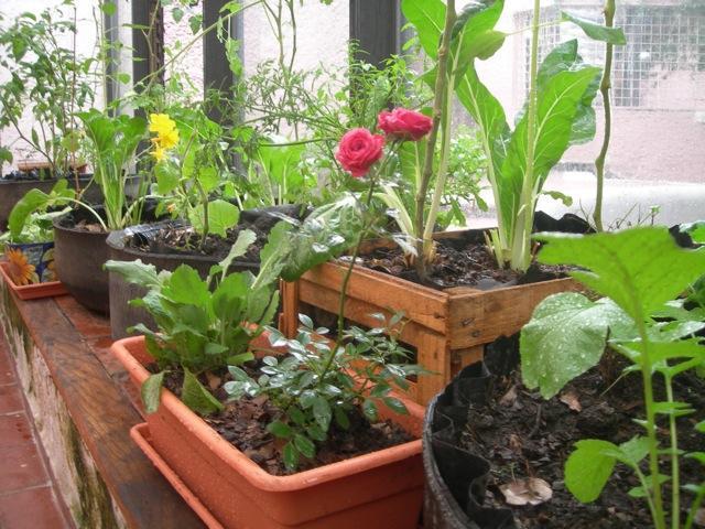 Помидоры, огурцы и лук новосибирцы начали выращивать на балк.